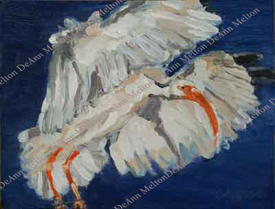 oil painting of flying ibis by DeAnn Melton